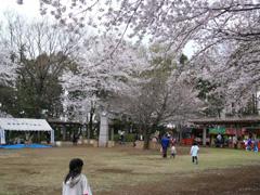 2006.4.2第29回城山さくらまつり 082.jpg